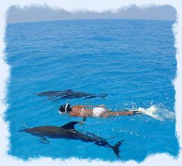Snorkeling with dolphins in Key West.