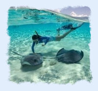 Lady snorkeling with Sting Rays
