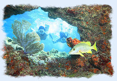 Couple in Key West Florida snorkeling a coral reef